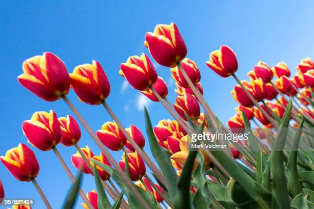 who is afraid of red, yellow and blue? - who stock pictures, royalty-free photos & images