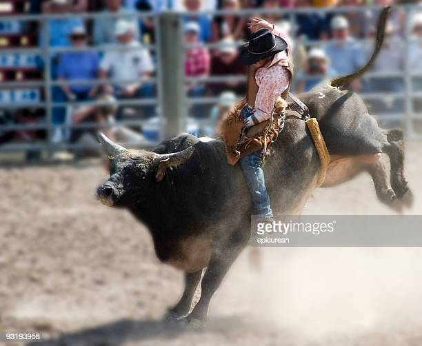 who says cowboys can't wear pink? - bull animal stock photos and pictures