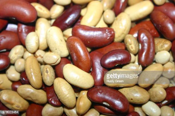 who spilled the beans - who stock pictures, royalty-free photos & images