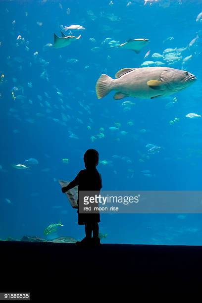 Wer, Fisch