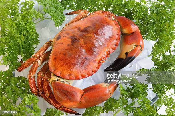 Whole cooked crab and parsley