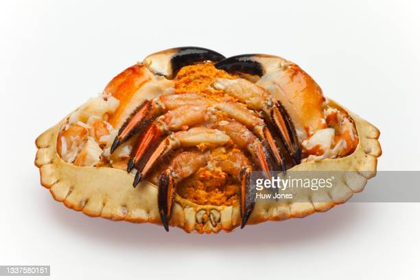 whole crab isolated on a white background - animal body part stock pictures, royalty-free photos & images