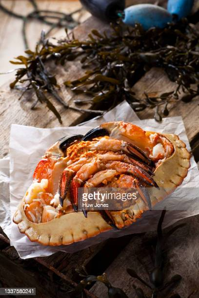 whole crab on a weathered wooden background with seaweed and a shipping rope - animal body part stock pictures, royalty-free photos & images