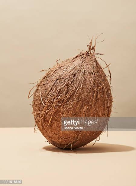 "whole fresh coconut - ""shana novak"" stock pictures, royalty-free photos & images"