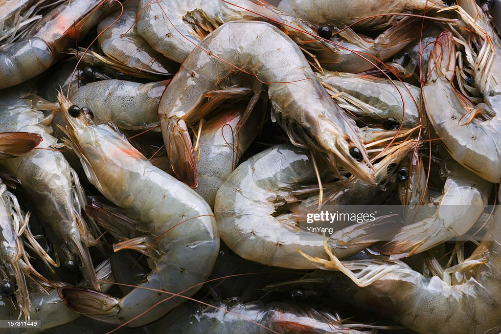 全体の新鮮な生の魚介類の海老の食品市場小売表示 : ストックフォト