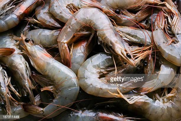 全体の新鮮な生の魚介類の海老の食品市場小売表示 - えび ストックフォトと画像