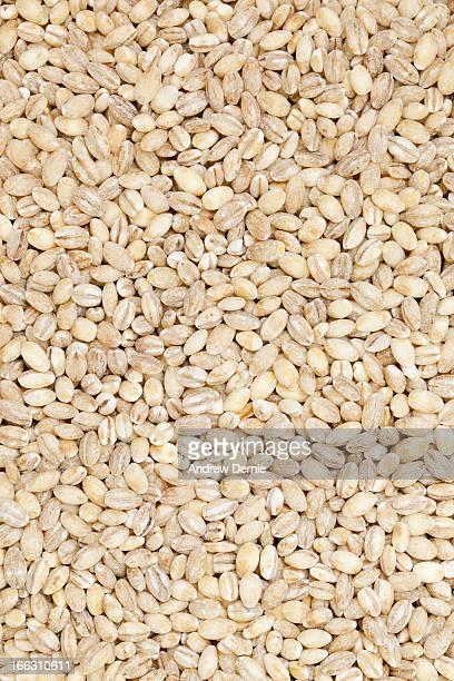 whole grain brown barley - andrew dernie imagens e fotografias de stock