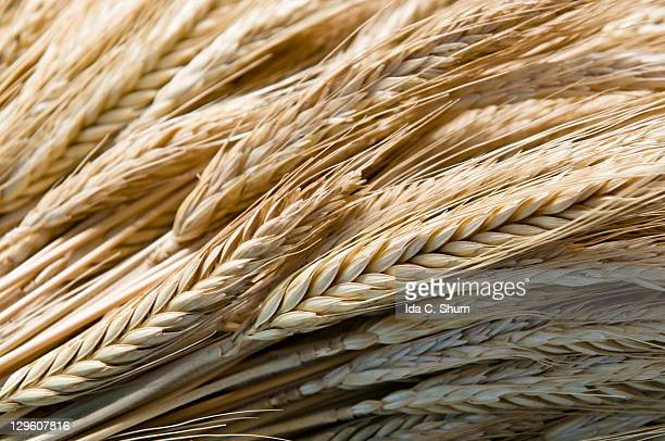 Whole wheat bundle