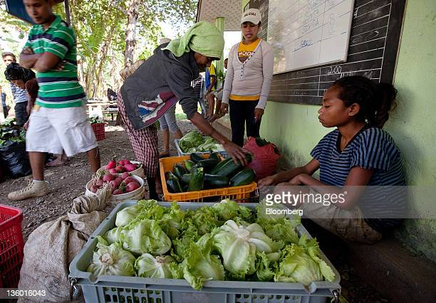 Wholesale farmers from the Aileu area south of Dili gather to sell their vegetables in Dili East Timor on Wednesday Oct 12 2011 East Timor became a...