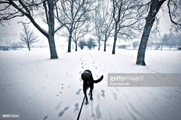 who's walking whom? - who stock pictures, royalty-free photos & images