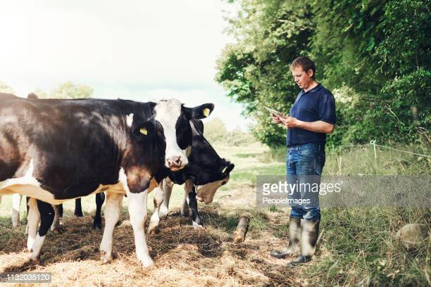 why did you call us? - dairy farm stock pictures, royalty-free photos & images