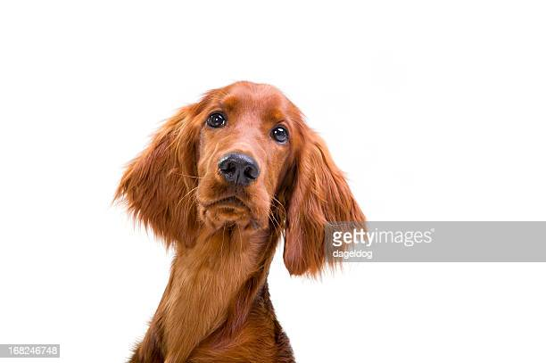 why? - animal body part stock pictures, royalty-free photos & images