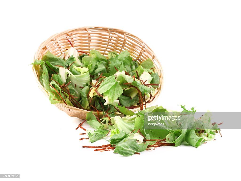 Wicker basket full of lettuce. : Stock Photo