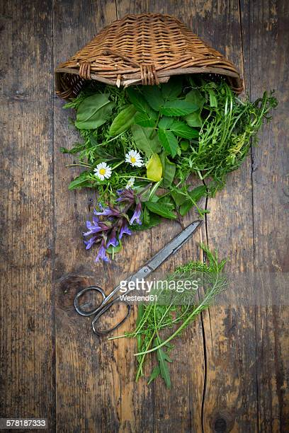 Wickerbasket of different wild herbs and edible flowers