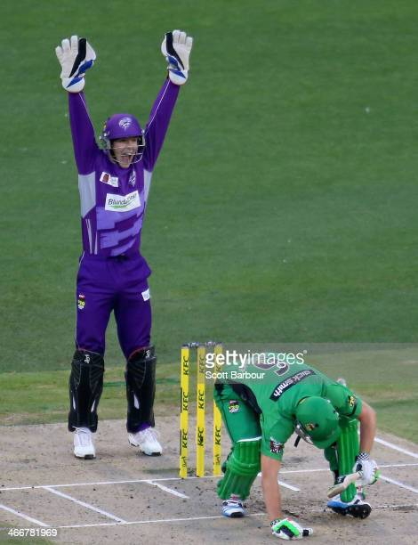 Wicketkeeper Tim Paine of the Hurricanes appeals successfully as Luke Wright of the Stars is dismissed LBW during the Big Bash League Semi Final...