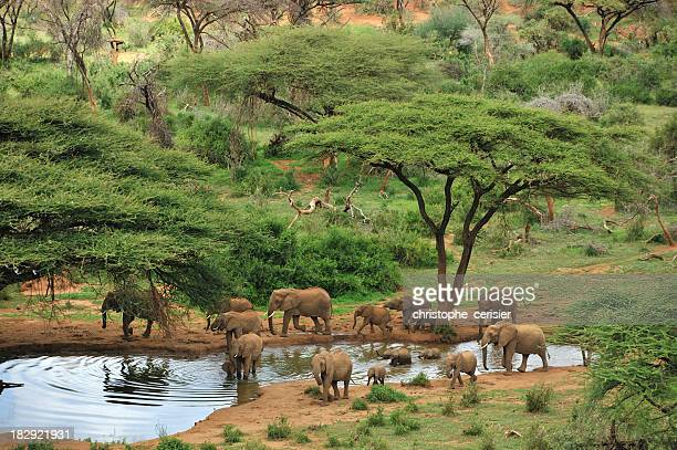 wide angle photograph of some grey elephants at a waterhole - kenya stock pictures, royalty-free photos & images