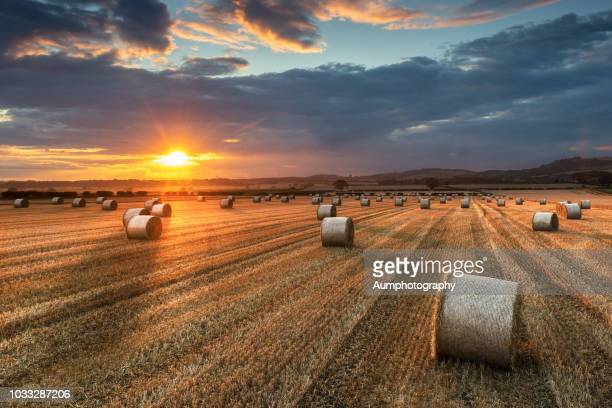 a wide angle view of a farmers field full of hay bales before sunset at roseberry topping. - corn harvest stock pictures, royalty-free photos & images