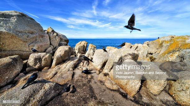 Wide Angle View of Birds and Squirrel on Rocks at Lovers Point State Marine Park in Monterey