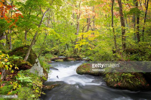 wide angle view of oirase gorge aomori in early autumn. - aomori prefecture stock pictures, royalty-free photos & images