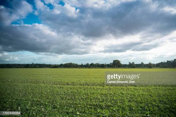 wide fields and sky, france - cotentin photos et images de collection