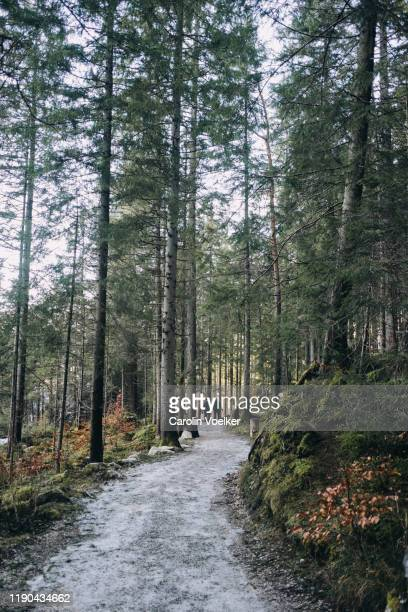 wide footpath winding through a pine forest in the german alps around lake eibsee, germany - strada di campagna foto e immagini stock