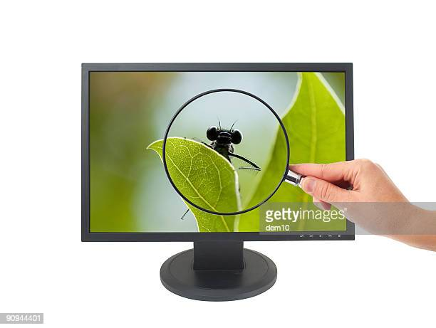 wide lcd - computer bug stock photos and pictures