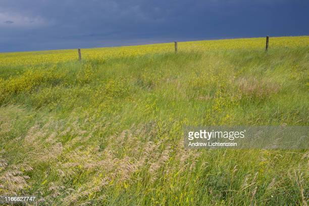 Wide open grasslands of central South Dakota dominate the landscape of the Cheyenne River Sioux Reservation on August 4 2019 in rural South Dakota