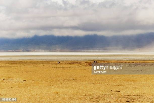 Wide open landscape with Grey crowned crane in Ngorongoro Conservation Area