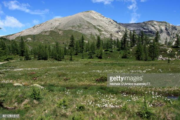 wide plateau in the alps, with larch forests and peat bogs - european larch stock pictures, royalty-free photos & images