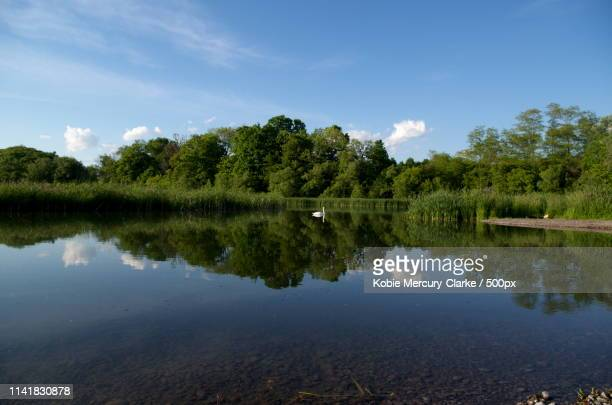 wide reflection - oshawa stock photos and pictures