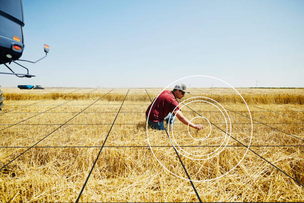 Wide shot of farmer kneeling in wheat field inspecting results of cut during harvest with grid illustration overlay