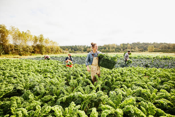 wide shot of smiling farmer carrying bin of freshly harvested organic picture id1310346830?k=20&m=1310346830&s=612x612&w=0&h=Gm3uEMqm clPSb8lZ LAKATZ657u2eCayzWVNTDOoFk=