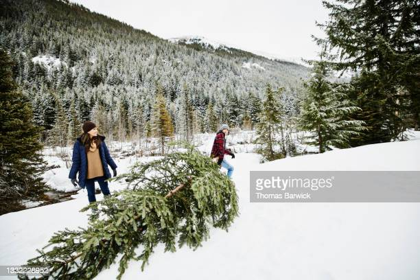 wide shot of teenage son dragging freshly cut christmas tree through snow on winter afternoon - embellished jacket stock pictures, royalty-free photos & images