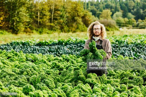 wide shot portrait of farmer holding freshly harvested organic kale in farm field on fall morning - responsibility stock pictures, royalty-free photos & images