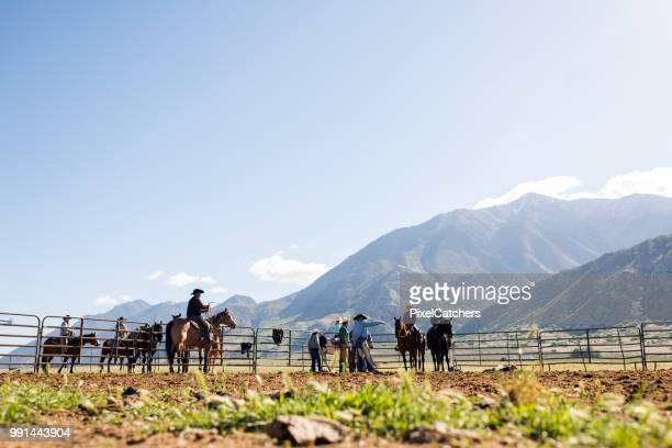 wide shot ranchers prepare for young cattle to be branded planning the days work - human castration photo stock photos and pictures