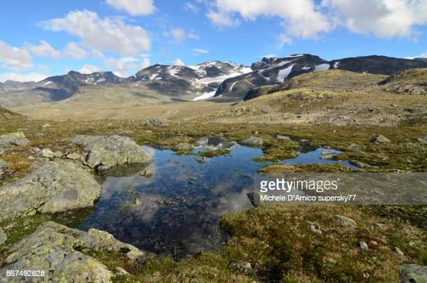 wide tundra spaces. - tundra foto e immagini stock