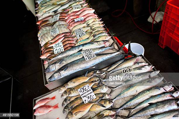 Wide variety of fish is seen for sale at the seafood and fish market in Veracruz Mexico 29 June 2015