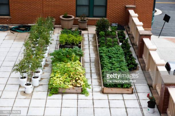 A wide variety of vegetables are grown on the rooftop of Potomac Yard Apartments The building doubles as an apartment made up of affordable units and...