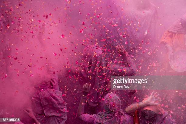 widows celebrates and dances inside a cloud of 'gulal' during the celebration of holi inside gopinath temple,vrindavan,india. - holi stock pictures, royalty-free photos & images