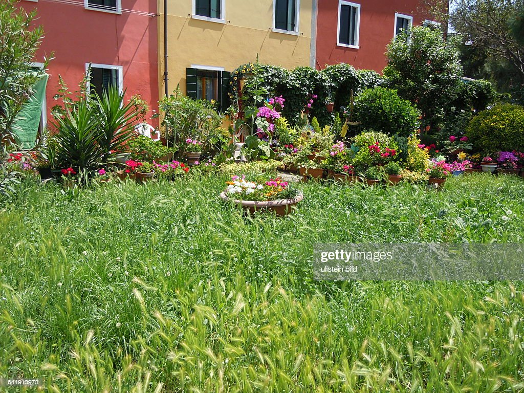 Bilder Blumengarten wiese und blumengarten pictures getty images