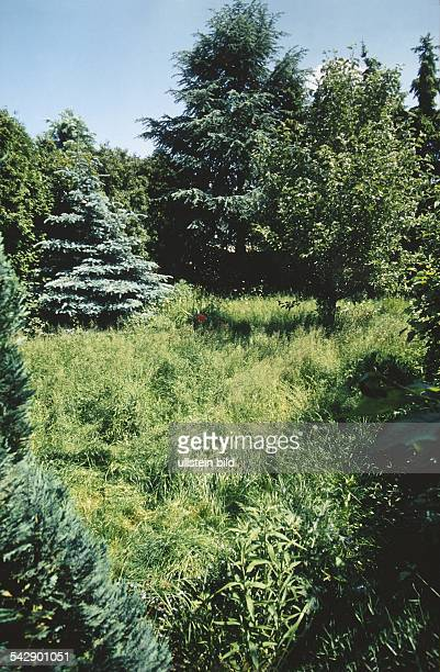 Wiese mit Nadel und Laubbäumen Undatiertes Foto