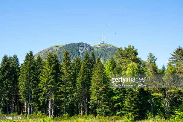 wiew of puy de dôme volcano of forest against clear blue sky - auvergne rhône alpes stock pictures, royalty-free photos & images
