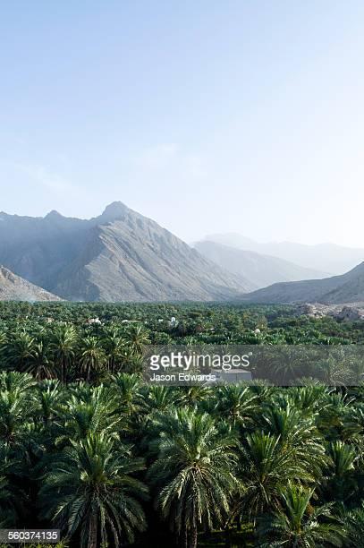 A date palm tree grove fills a desert valley floor beneath jagged mountain peaks.