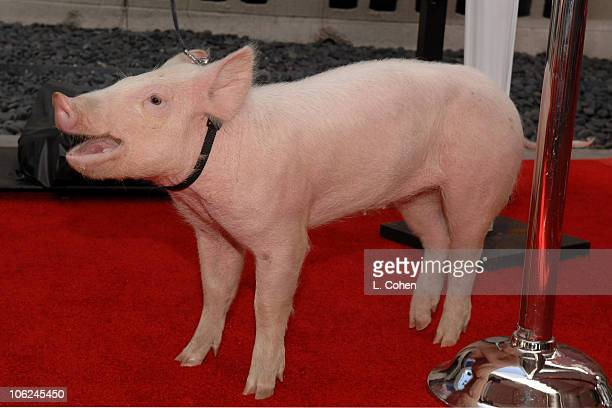 Wilbur from Charlotte's Web during Charlotte's Web Los Angeles Premiere Red Carpet at ArcLight Theatres in Hollywood California United States