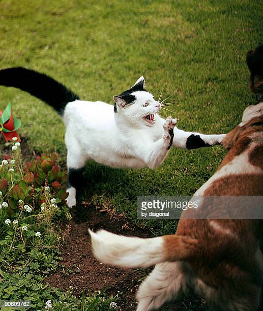 wilbury attack! - dog fight stock pictures, royalty-free photos & images