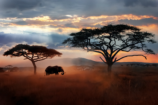 Wild African elephant in the savannah. Serengeti National Park. Wildlife of Tanzania. African landscape. 1131949134