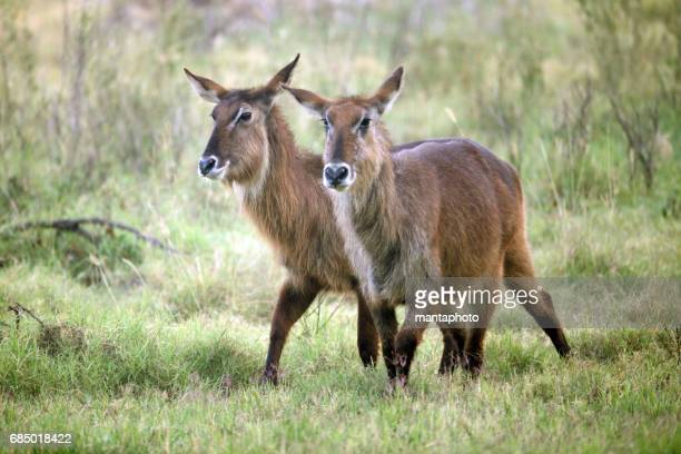 Wild animal kenya