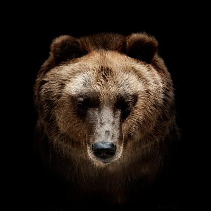 Wild animals 644570048