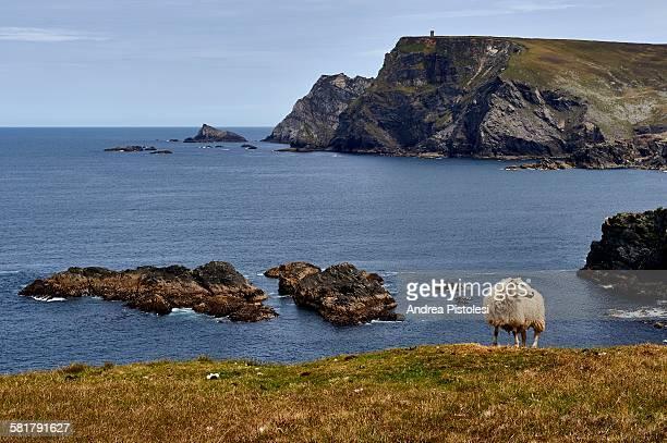 wild atlantic way, ireland west coast - contea di donegal foto e immagini stock