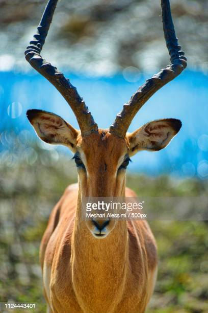 wild beauty - mammal stock pictures, royalty-free photos & images